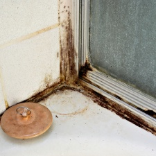 Mold Remediation Marketing Mold Removal Marketing